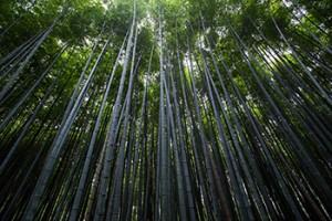 trees_350