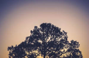 tree2_350