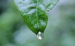 leaf_350_b